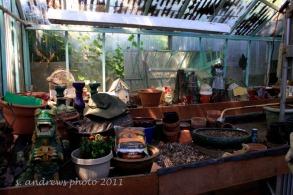 Dulcy's Garden July 2011_27