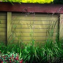 Grasses stylized