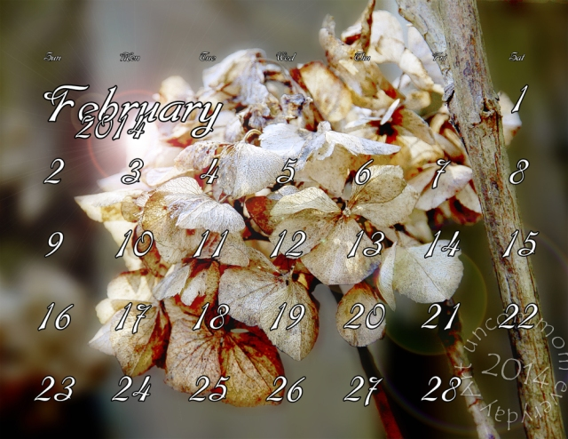 "A February calendar background for your computer. A ghost from last summer, hydrangea blooms weathered but still clinging to the bush. Feel free to share, download and enjoy all month long! Just leave me a ""like"" for payment."