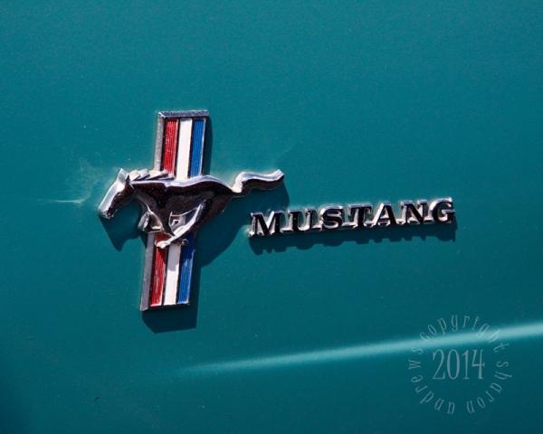 1404 Mustangs_032  Lindas Turquiose Emblem