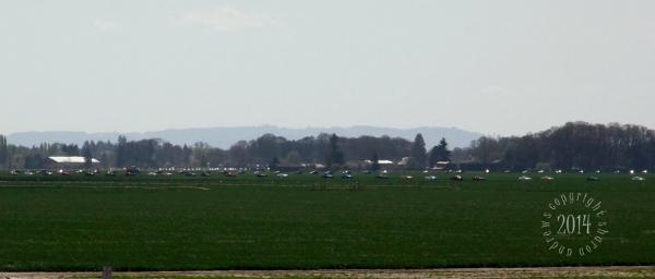 1404 Mustangs_164 10 miles of mustangs