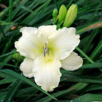 Mt Pleasant Iris Farm _08_1