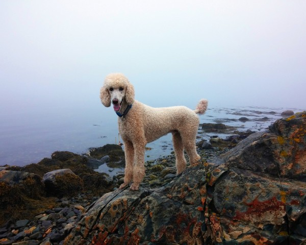 Pup on the rocks