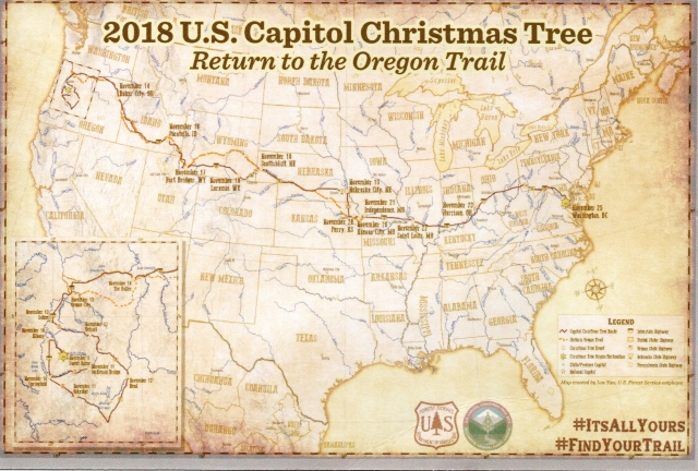 Capitol Christmas Tree postcard